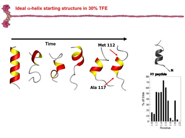 H1PeptideSlide4