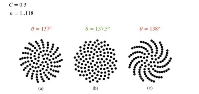 pattern_in_nature_9_7_2018-014-e1533202385294.jpeg
